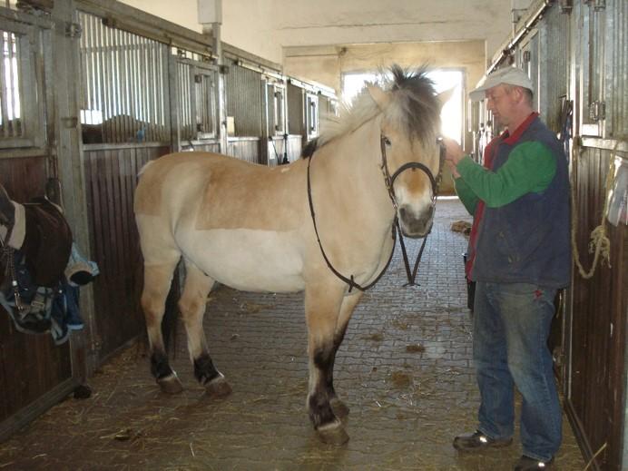 Voltigierpferd Janosch